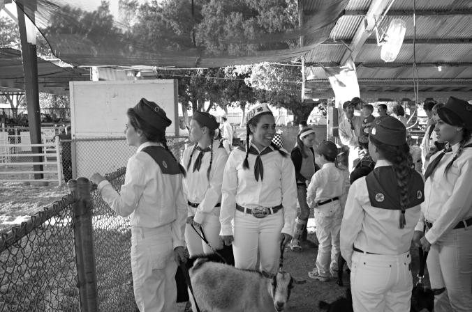 Allison gets ready for competition at the Contra Costa County Fair.