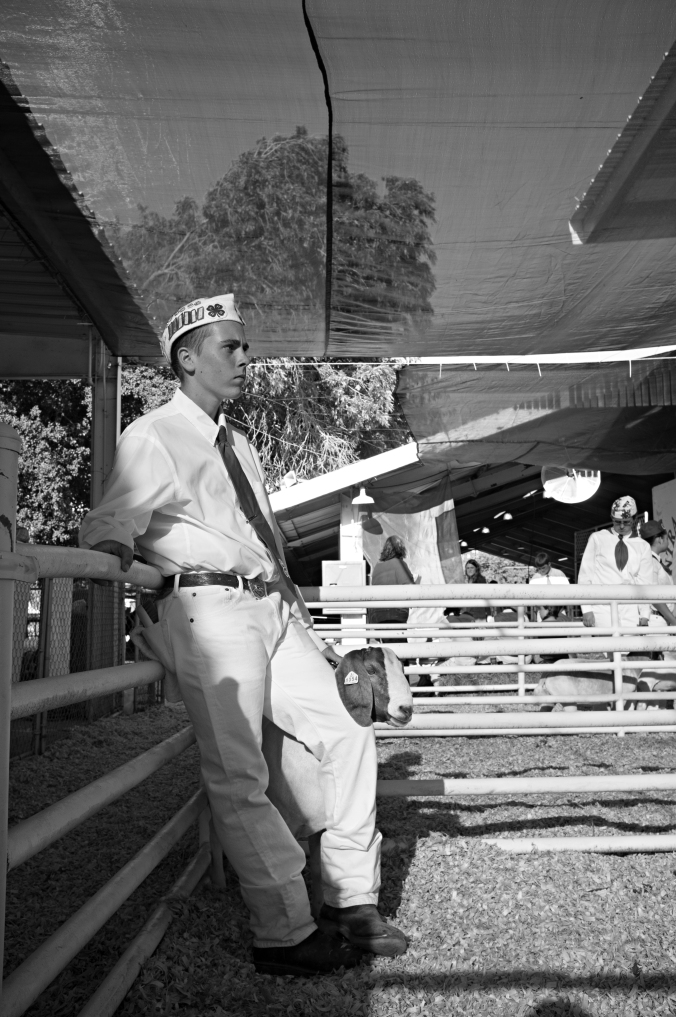 Anthony gets ready for the pig show at the Contra Costa County Fair. Photo by Rafael Roy.