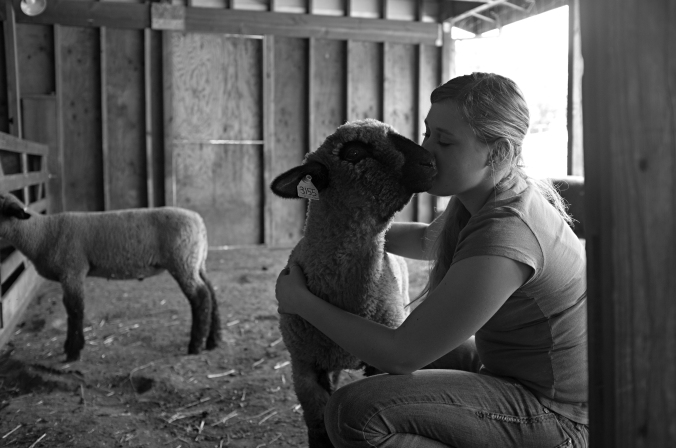 When her lambs are still very small, Kelly starts training them simply by giving them lots of attention in the barn. Photo by Rafael Roy.