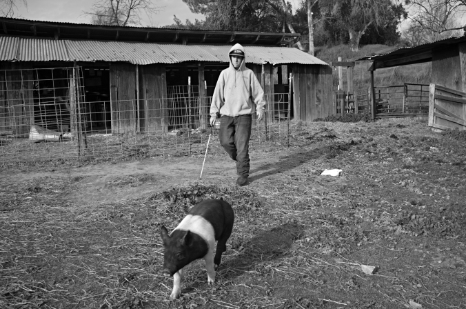 Anthony works with his pig, Panda. Anthony doesn't have room to keep his animals, but luckily some family friends let him use their property in Martinez, California, not far from his house. Photo by Rafael Roy.